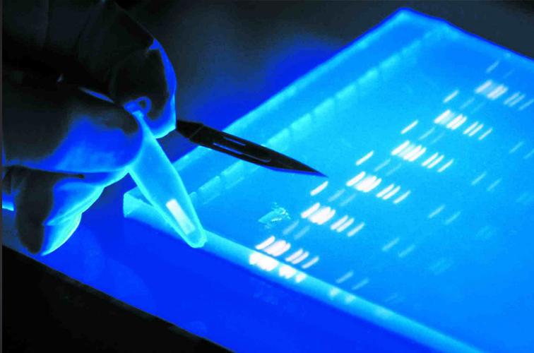 <colorise>&nbsp;ATELIER&nbsp;</colorise>&nbsp;Introduction à la biologie moléculaire