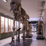 Musée de Zoologie
