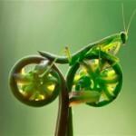biomimetisme-prouvenco-info