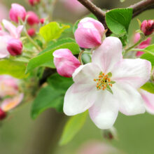 Frühling 12.1
